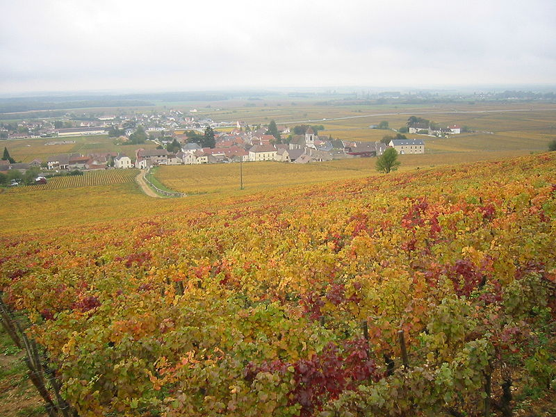 vignoble de Côte d'Or