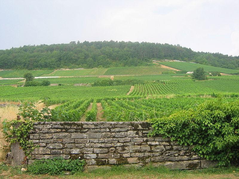 vignes de Gevrey-Chambertin (Wikipedia)